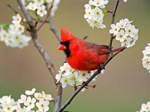 www.birdsgallery.net