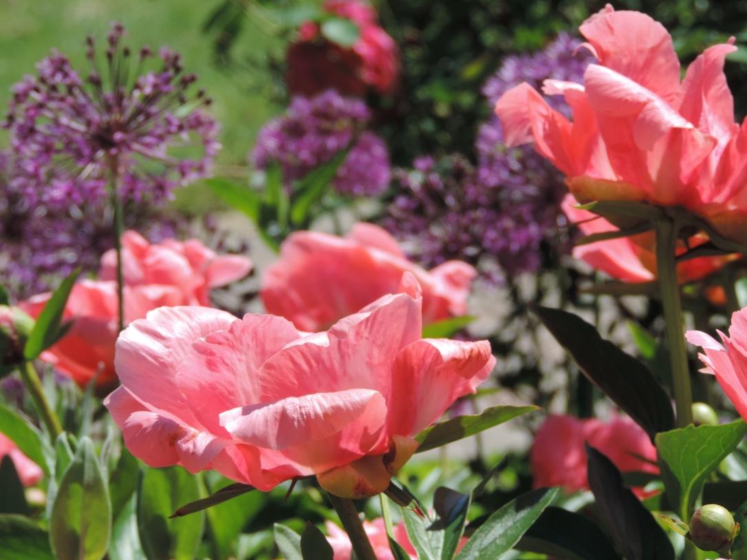 Mother's Day Garden 032
